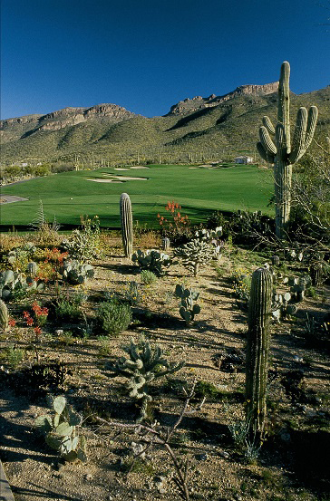 Photo of desert landscape next to a golf course